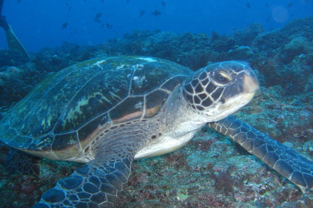 ウミガメの画像 p1_19